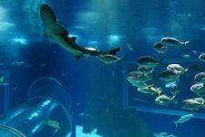 AquaRio ganha selo de certificação de sustentabilidade marinha